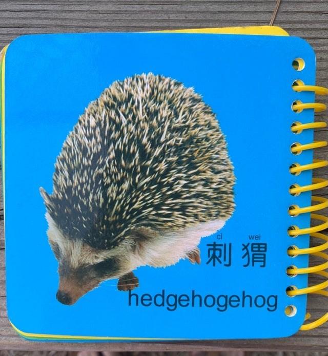 Hedgehog - wei 刺猬 hedgehogehog