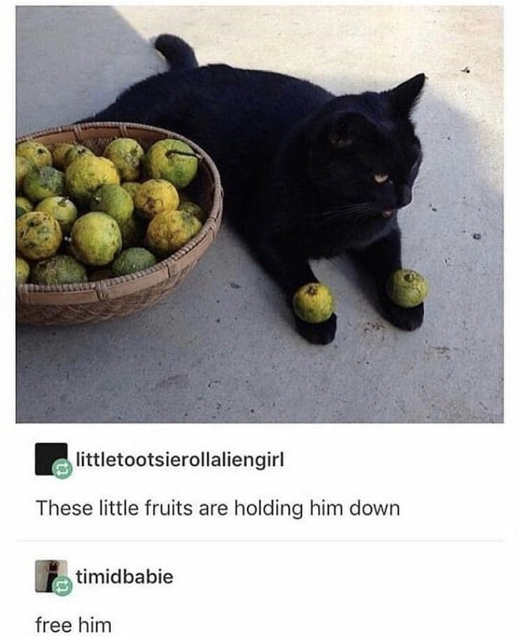 Food - littletootsierollaliengirl These little fruits are holding him down timidbabie free him