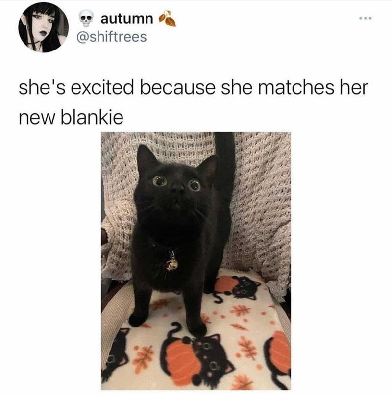 Vertebrate - autumn ... @shiftrees she's excited because she matches her new blankie
