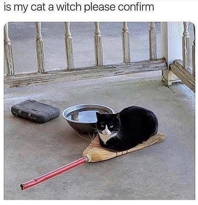 Comfort - is my cat a witch please confirm