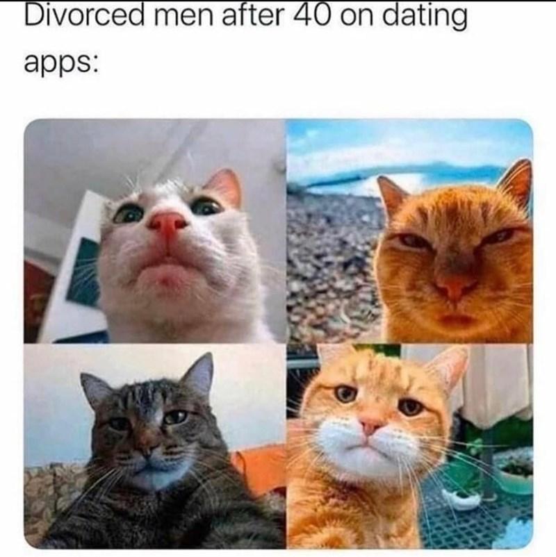 Cat - Divorced men after 40 on dating apps: