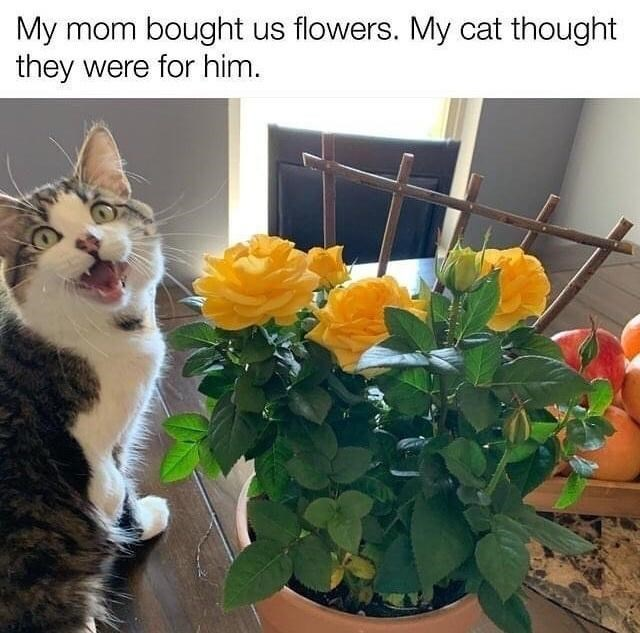 Flower - My mom bought us flowers. My cat thought they were for him.