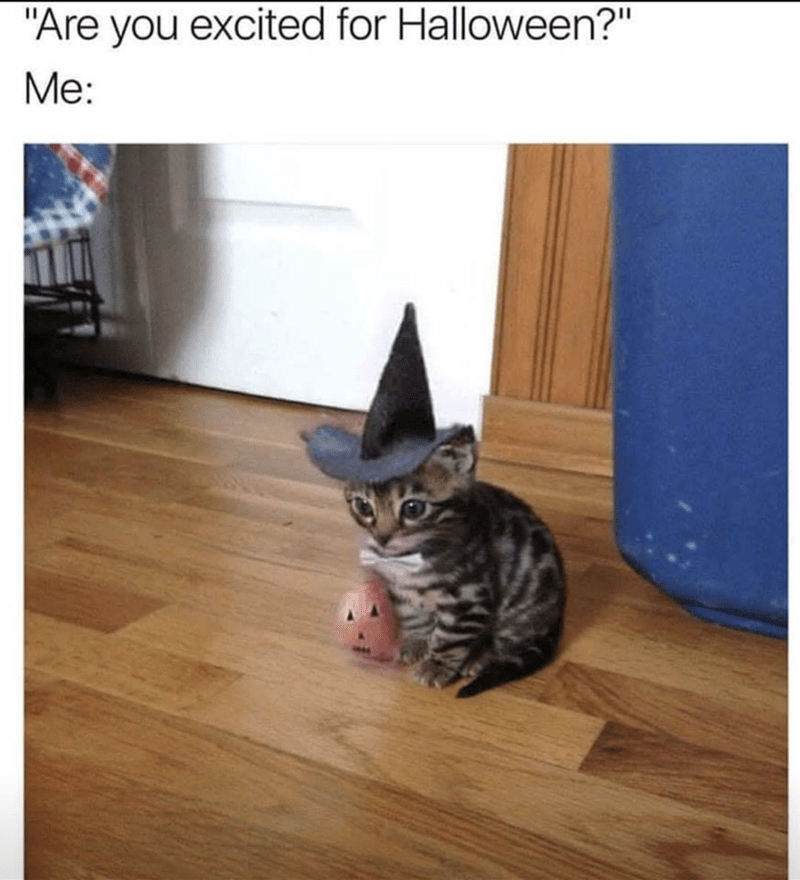 """Cat - """"Are you excited for Halloween?"""" Me:"""