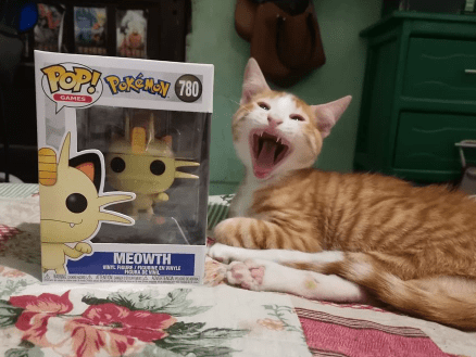 Cat - GAMES MEOWTH RE GAINANYLE