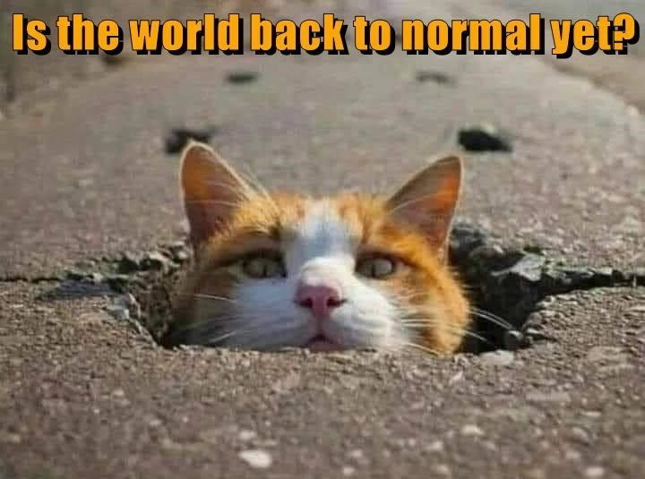 Cat - Is the world back to normal yet?