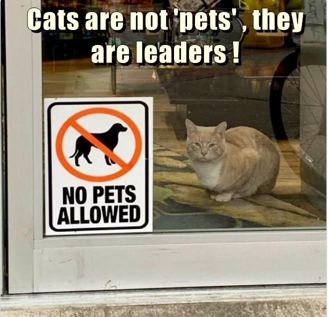 Cat - Cats are not pets', they are leaders! NO PETS ALLOWED