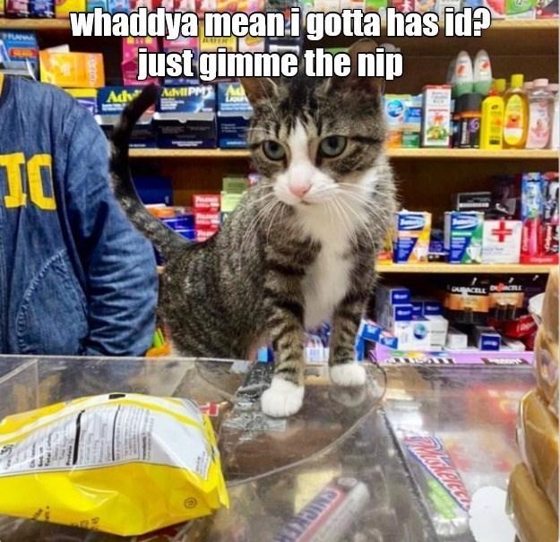 Cat - whaddya meani gotta has id? just gimme the nip PRANAL Adv AdviIPM