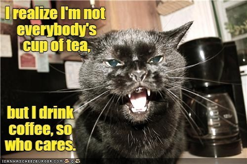 Cat - I realize I'm not everybody's cup of tea, but I drink coffee, so who cares. ICANHASCHEEZBURGER.COM G