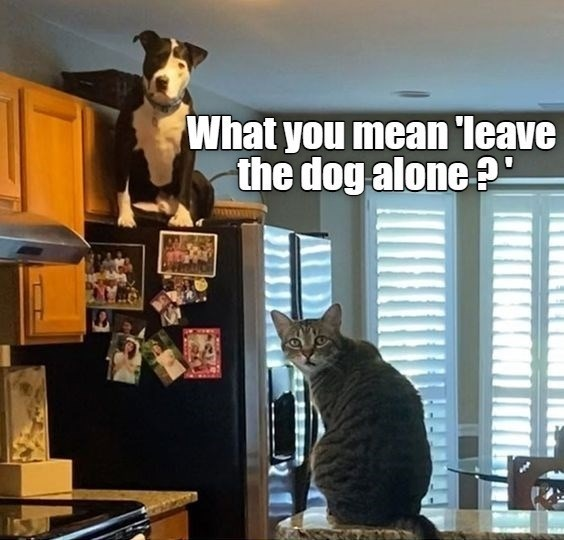 Cat - What you mean 'leave the dog alone?