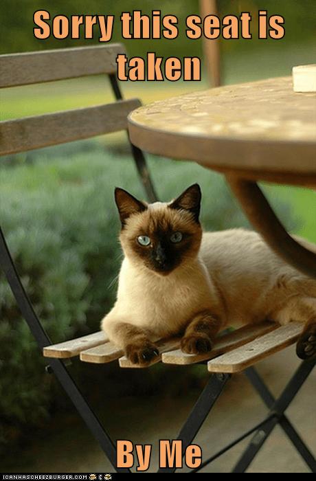 Siamese - Sorry this seat is taken Вy Ме ICANHASCHEEZBURGER.COM