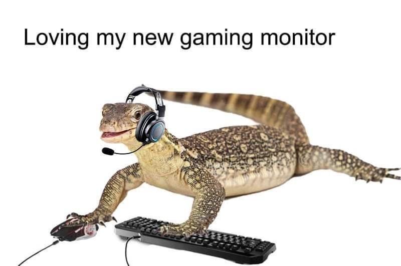 Carnivore - Loving my new gaming monitor