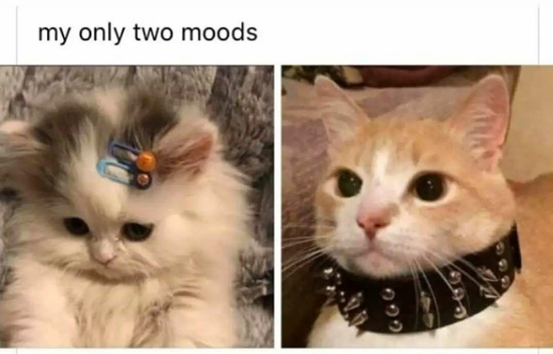 Nose - my only two moods