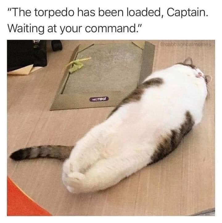 """Cat - """"The torpedo has been loaded, Captain. Waiting at your command."""" Ccabbagecatmemes NEOTOG!"""