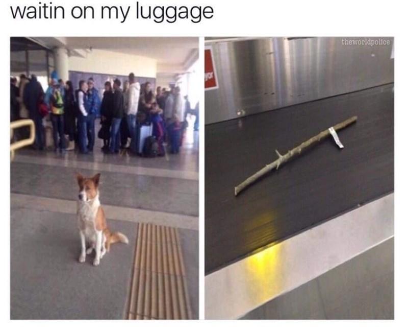 Dog - waitin on my luggage theworldpolice or