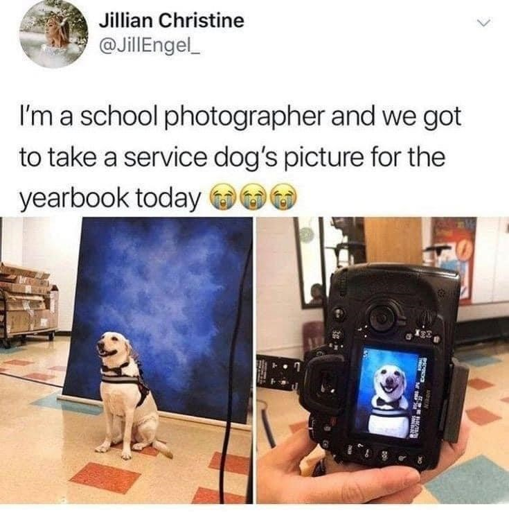 Product - Jillian Christine @JillEngel_ I'm a school photographer and we got to take a service dog's picture for the yearbook today O00