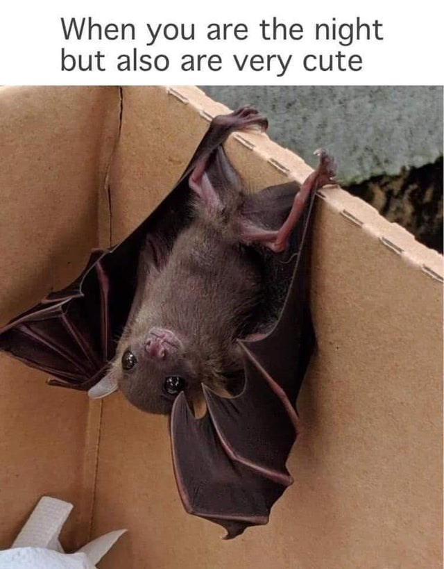 Brown - When you are the night but also are very cute