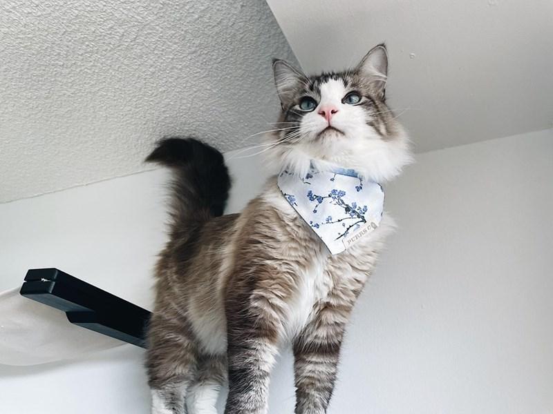 Cat - PURRS 0O