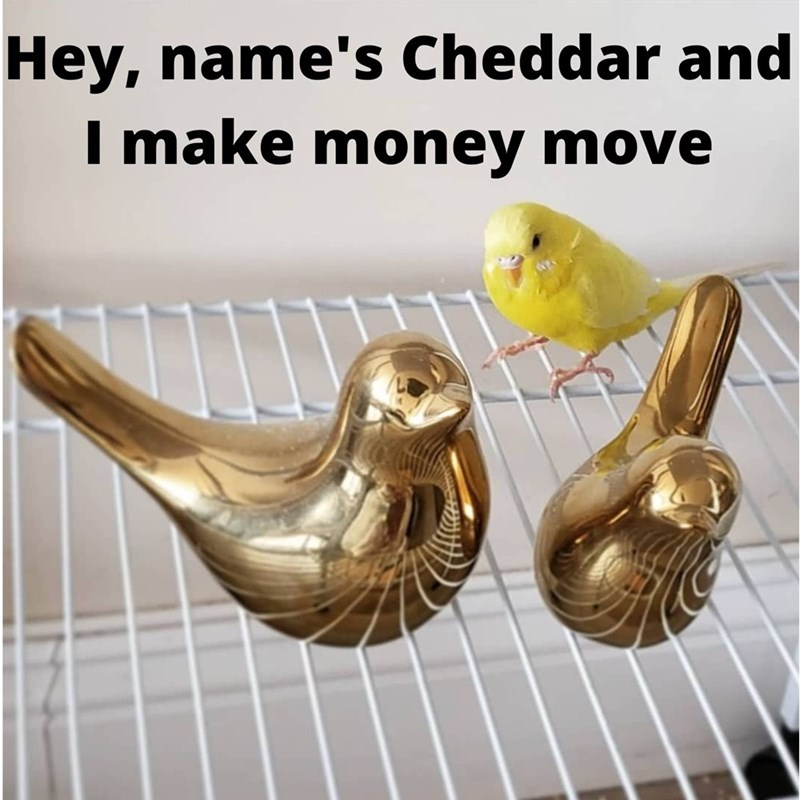 Musical instrument - Hey, name's Cheddar and I make money move