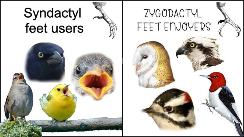 Bird - Syndactyl feet users ZYGODACTYL FEET ENJOYERS
