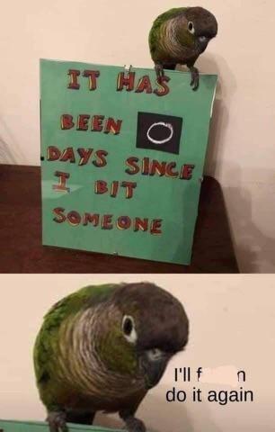 Bird - IT HAS BEEN DAYS SINCE I BIT SOMEONE I'll f n do it again