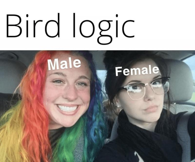 Clothing - Bird logic Male Female