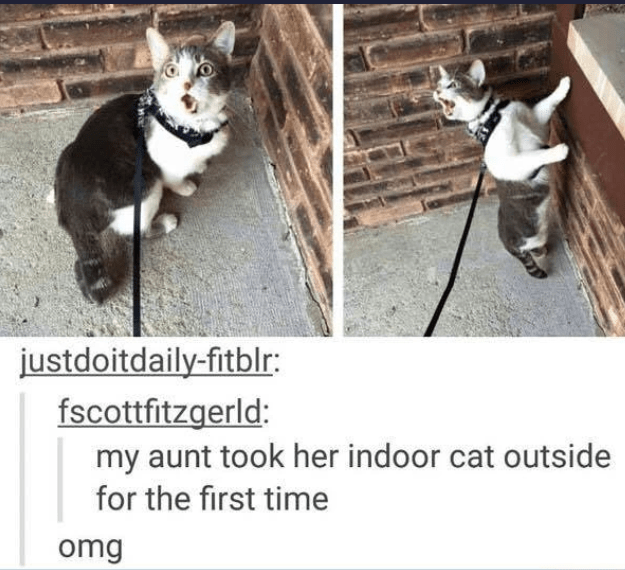 Photograph - justdoitdaily-fitblr: fscottfitzgerld: my aunt took her indoor cat outside for the first time omg
