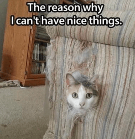 Cat - The reason why Ican't have nice things.