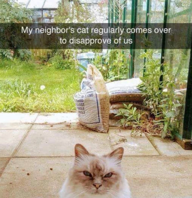 Plant - My neighbor's cat regularly comes over to disapprove of us O SAND AND LAST LE RE