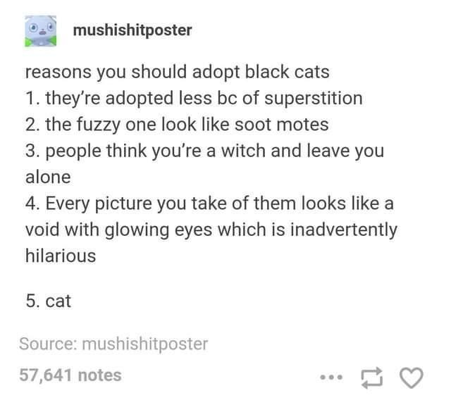 Font - mushishitposter reasons you should adopt black cats 1. they're adopted less bc of superstition 2. the fuzzy one look like soot motes 3. people think you're a witch and leave you alone 4. Every picture you take of them looks like a void with glowing eyes which is inadvertently hilarious 5. cat Source: mushishitposter 57,641 notes