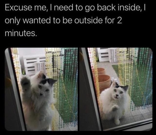 Cat - Excuse me, I need to go back inside, I only wanted to be outside for 2 minutes.