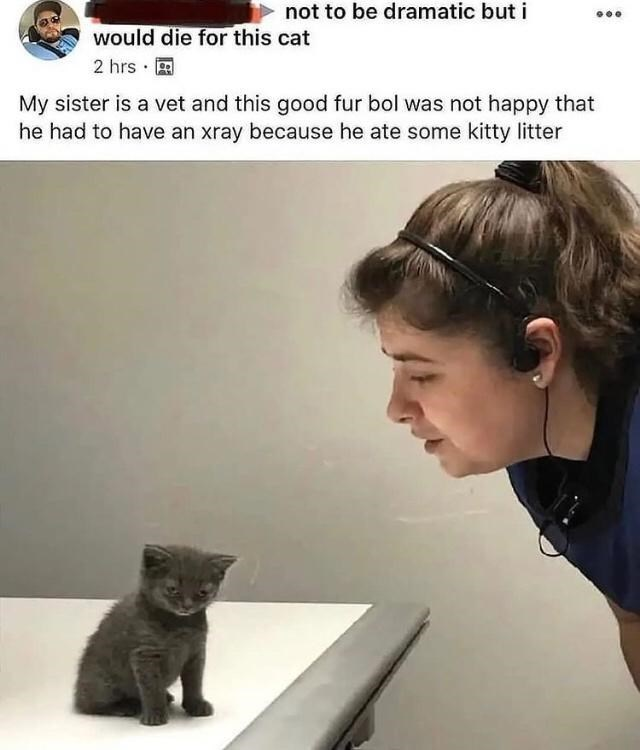 Human - not to be dramatic but i would die for this cat 2 hrs · A My sister is a vet and this good fur bol was not happy that he had to have an xray because he ate some kitty litter