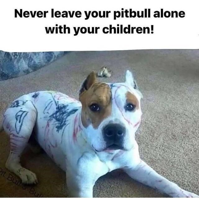 Dog - Never leave your pitbull alone with your children! t Bu Bu