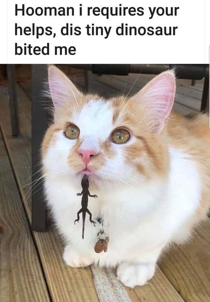 Cat - Hooman i requires your helps, dis tiny dinosaur bited me