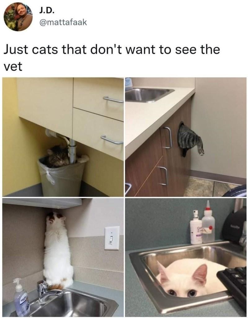 Plumbing fixture - J.D. @mattafaak Just cats that don't want to see the vet Sasthe