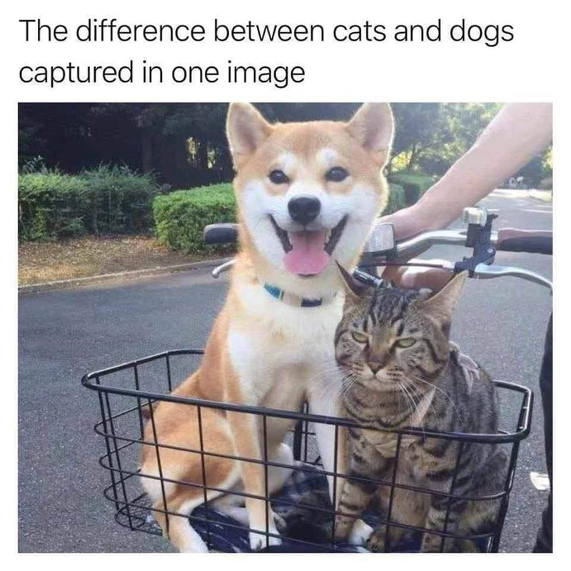 Dog - The difference between cats and dogs captured in one image