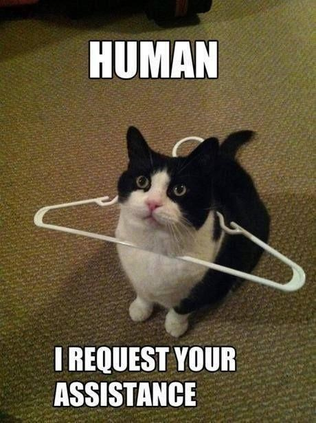 Cat - HUMAN I REQUEST YOUR ASSISTANCE