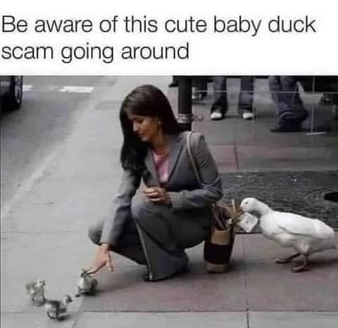 Shoe - Be aware of this cute baby duck scam going around