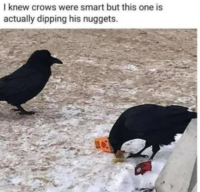 Bird - I knew crows were smart but this one is actually dipping his nuggets.