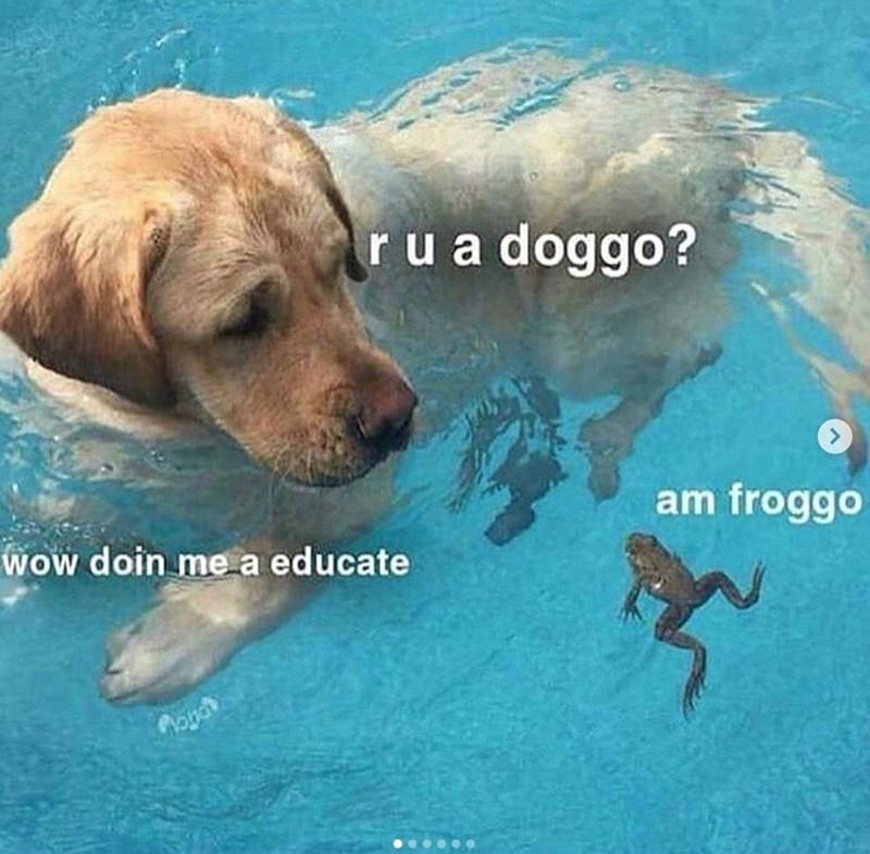 Water - rua doggo? am froggo Wow doin me a educate