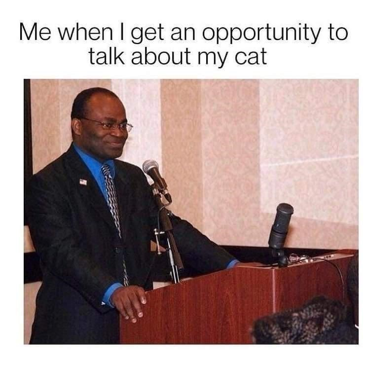 Microphone - Me when I get an opportunity to talk about my cat
