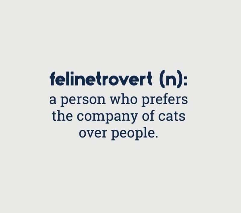 Font - felinetrovert (n): a person who prefers the company of cats over people.