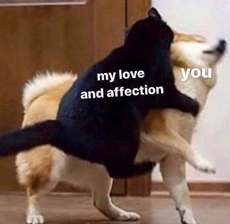 Dog - my love and affection you