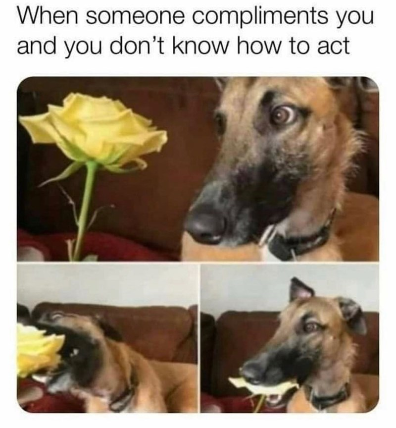 Flower - When someone compliments you and you don't know how to act