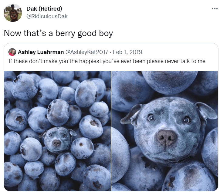 Organism - Dak (Retired) @RidiculousDak Now that's a berry good boy Ashley Luehrman @AshleyKat2017 · Feb 1, 2019 If these don't make you the happiest you've ever been please never talk to me