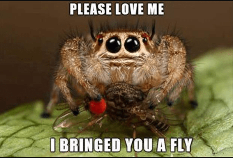 Arthropod - PLEASE LOVE ME I BRINGED YOU A FLY