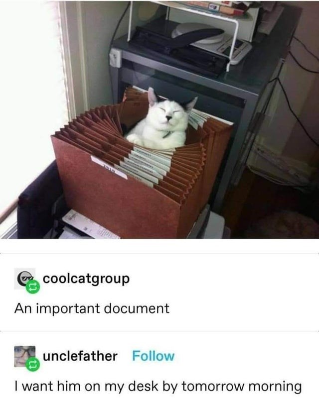 Cat - coolcatgroup An important document unclefather Follow I want him on my desk by tomorrow morning