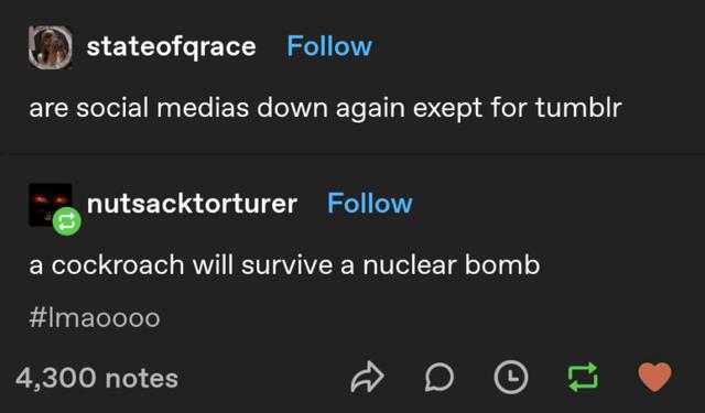 Font - stateofqrace Follow are social medias down again exept for tumblr nutsacktorturer Follow a cockroach will survive a nuclear bomb #Imaoooo 4,300 notes
