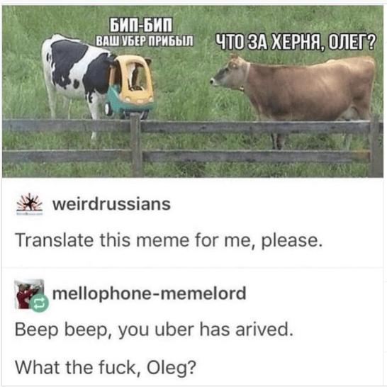 Ecoregion - БИП-БИП ВАШ УБЕР ПРИБЫЛ ЧТО ЗА ХЕРНЯ, ОЛЕГ? weirdrussians Translate this meme for me, please. mellophone-memelord Beep beep, you uber has arived. What the fuck, Oleg?
