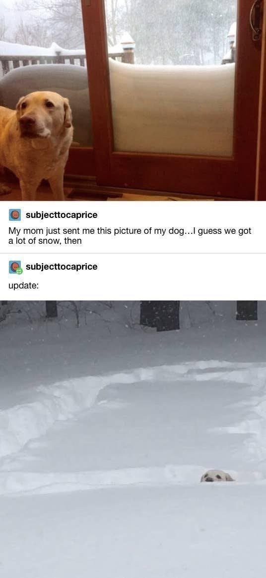 Product - O subjecttocaprice My mom just sent me this picture of my dog...l guess we got a lot of snow, then subjecttocaprice update: