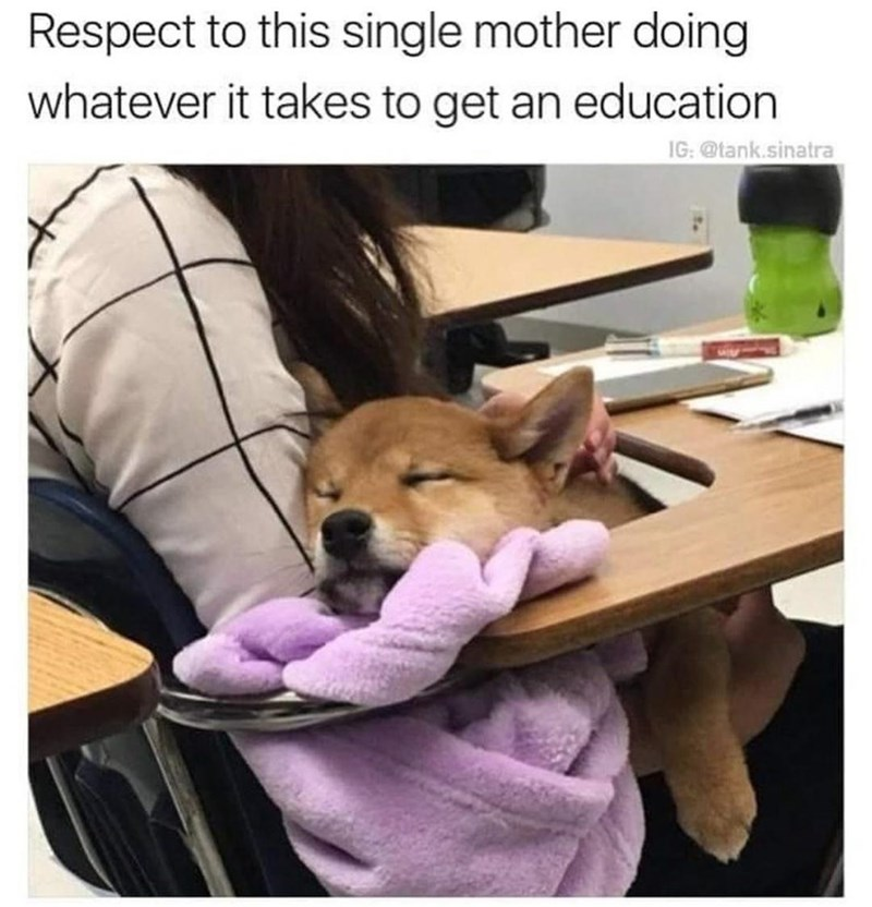 Dog - Respect to this single mother doing whatever it takes to get an education IG: @tank.sinatra